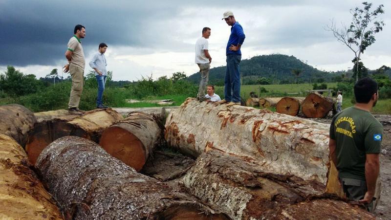 apreensão madeira rondolândia 4 (Copy)