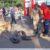 Sorriso: Cobra sucuri de cerca de 5 mts é capturada em plena avenida blumenau